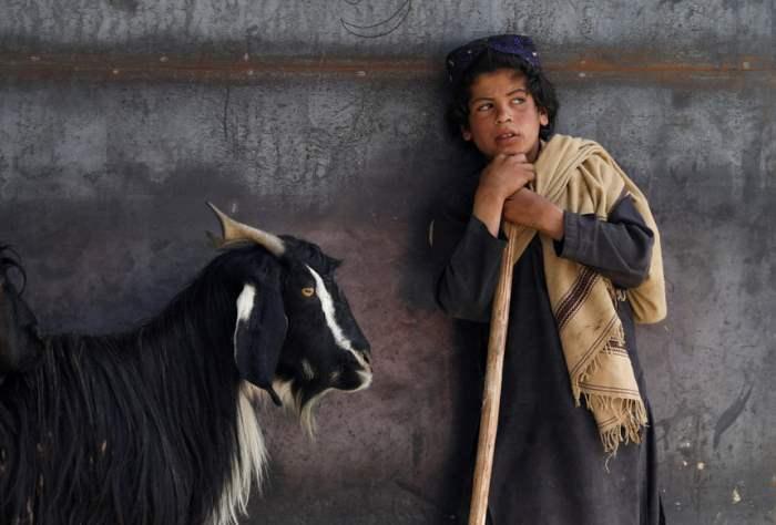 Продавец крупного рогатого скота
