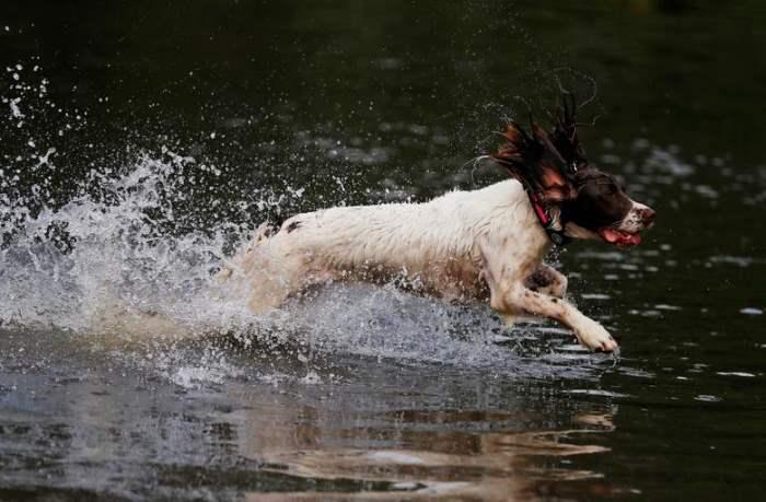 Собака бежит через паводковые воды