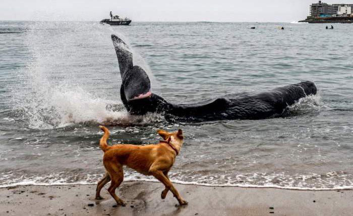 Собака смотрит на пятиметрового кашалота