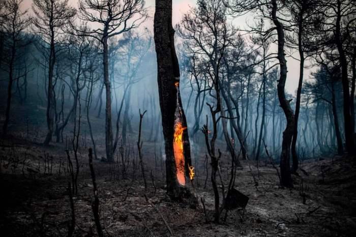 Ствол дерева горит