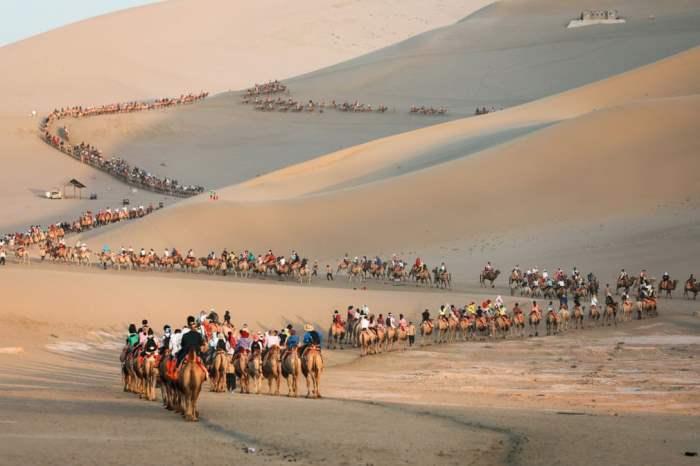 Туристы катаются на верблюдах