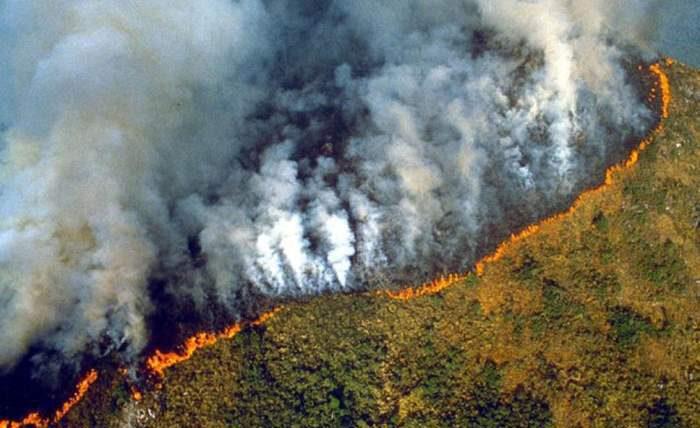 амазонские джунгли горят