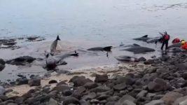 выбросились киты