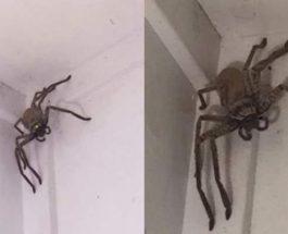 паук дома