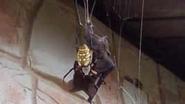 паук и летучая мышь