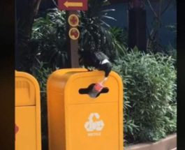 птица и бутылка