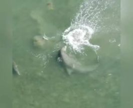 флорида дельфин