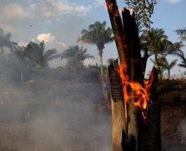 amazon wildfire
