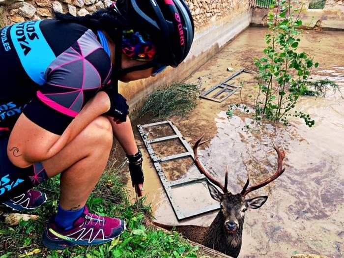 Велосипедист помогает оленю