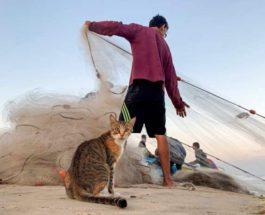 Кошка смотрит, как палестинский рыбак тянет сеть