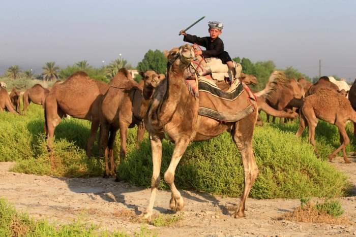 Пастух со стадом верблюдов