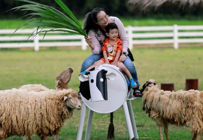 Семья кормит овец