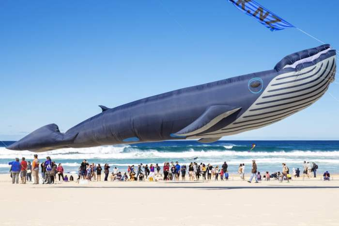 воздушный змей в форме горбатого кита