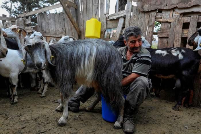 доит козу