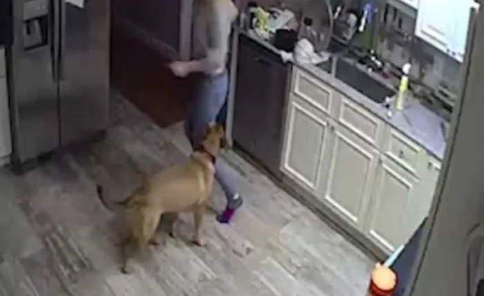 изменила с собакой