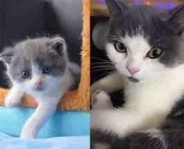 котенок клон