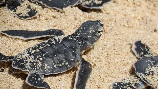 мертвые черепахи