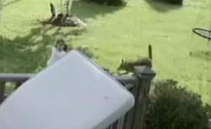 нападение койота
