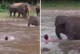 слоненок река человек