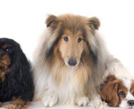 собаки болезнь