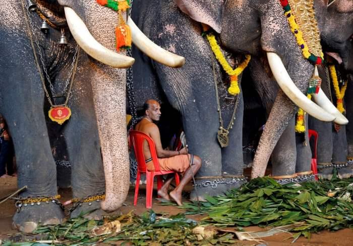 со слонами