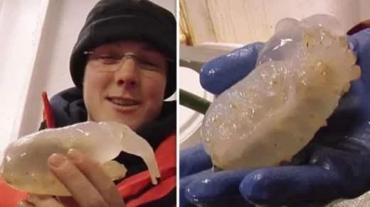 странные существа в глубинах Антарктиды