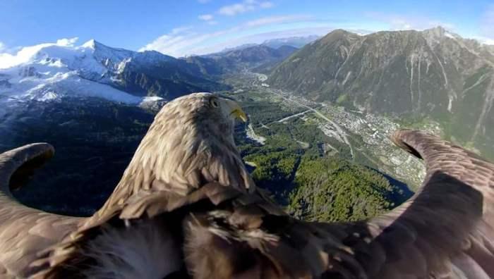 Девятилетний орлан-белохвост