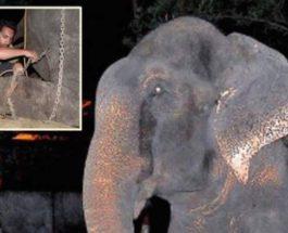 Слон заплакал