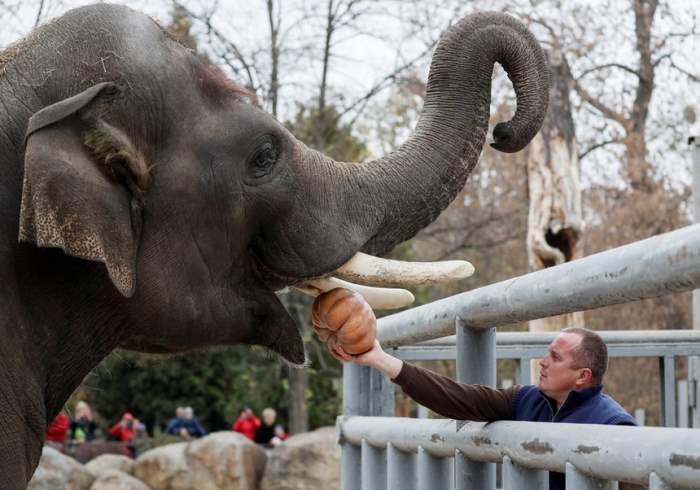 Слон получает тыкву на Хэллоуин
