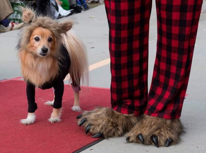 Собаки гуляют по красной ковровой дорожке