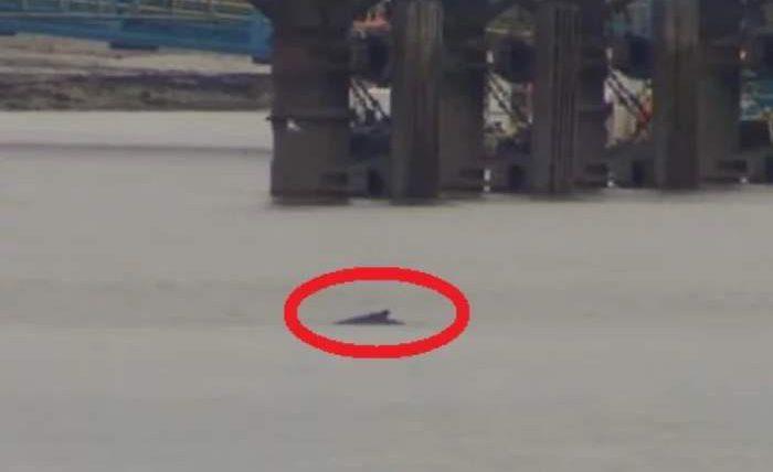 горбатый кит лондон