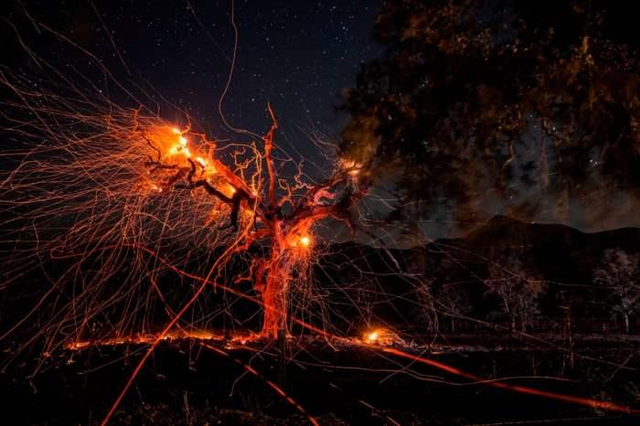 горит дерево