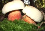 грибы Германия