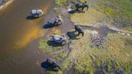 зимбабве слоны