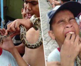 змея в индонезии