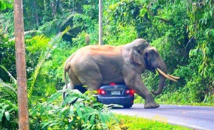 слон машина туристы
