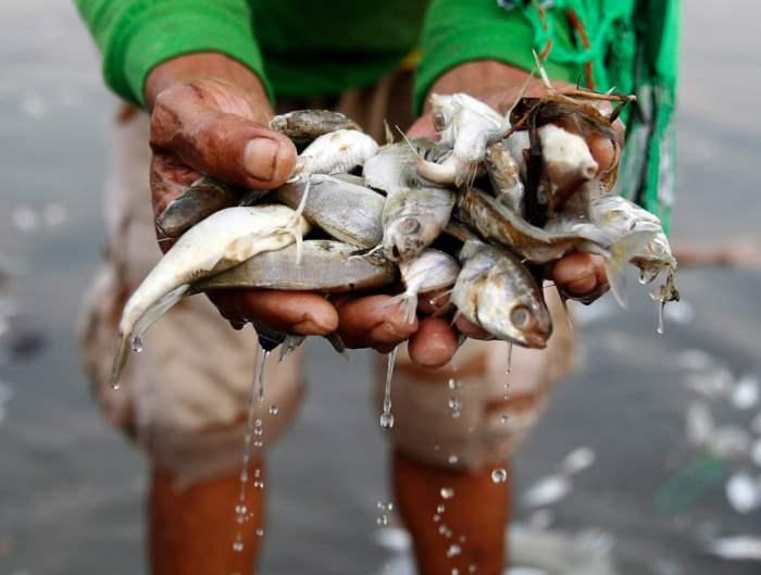 собирает мертвую рыбу