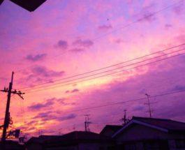 хагибис фиолетовое небо
