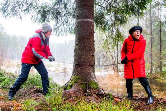 Норвегия с 1947 года ежегодно дарит Великобританию елку