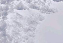 Из-за таяния льда в Антарктиде появились загадочные столбы, которые сразу привлекли внимание ученых