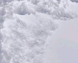 антарктида столбы
