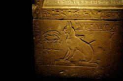 Археологи в Египте обнаружили останки «очень странного животного»