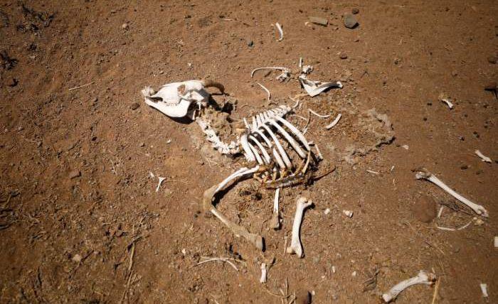 засуха африка