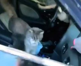 кошки в машине