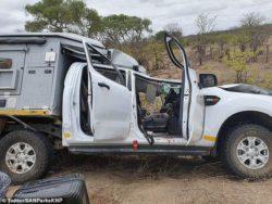 В Африке туристы сбили жирафа, а потом врезались в другое авто