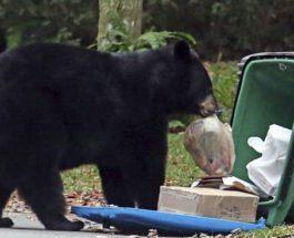 медведи мусорные баки