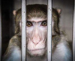обезьяна вирус