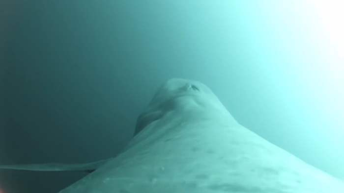 пульс кита