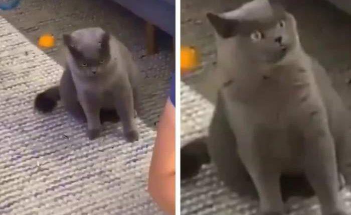 ревнивый кот