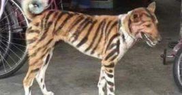 собака тигр